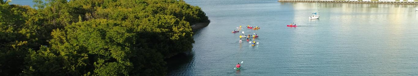 Get out of traffic and into the water with Critical Splash and help clean up Pelican Island